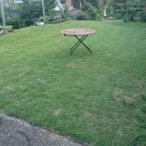 芝生の密度が上がってきた👍