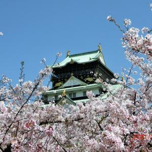 大阪城の桜 その2