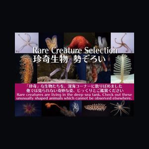 沖縄美ら海水族館の深海コーナーで「珍奇生物 勢ぞろい」展示中