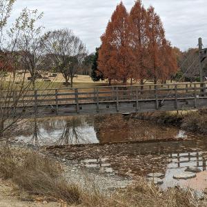 栃木の名所旧跡:メタセコイアの有るとちぎわんぱく公園