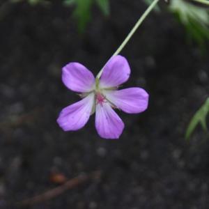 栃木の自然:夏の花咲く小田代ヶ原