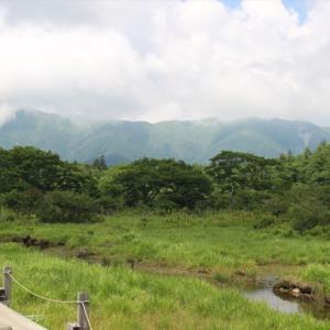 栃木の自然:夏の沼原湿原