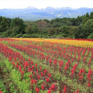 栃木の名所:那須連峰直下の那須フラワーワールド