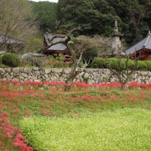 栃木の名所:彼岸花咲く常楽寺(録事尊)