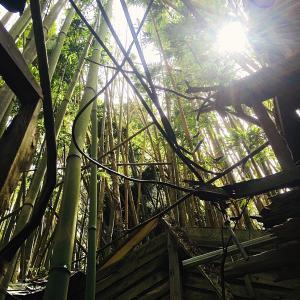 千葉県で人気の心霊スポット・廃虚ツアーに行ってきた【番外編】