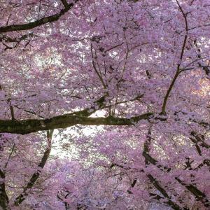 【12曲目】さくらさくら咲く 〜あの日君を待つ 空と同じで〜 / marble
