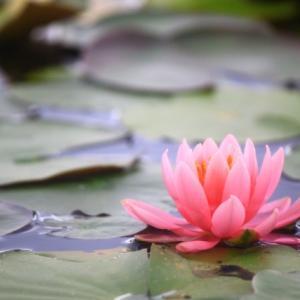 『無畏三蔵禅要』5 十重戒門 無畏三蔵禅要の菩薩戒