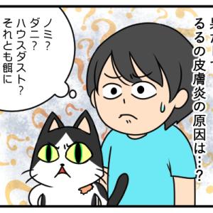 【猫】るるの皮膚炎、血液検査の結果が出ました