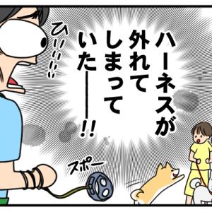犬の散歩中のハプニング_2