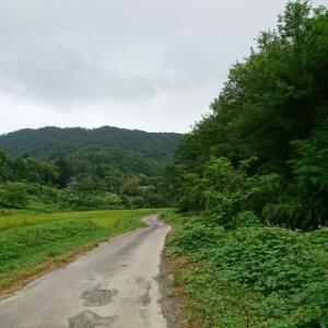 お出かけ風景・夕方の散歩道・山野草