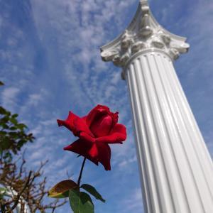 秋のばら苑〜薔薇と空〜②薔薇・赤とオレンジ、その他