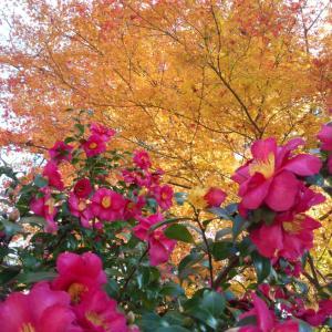 高尾山の紅葉2020秋