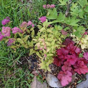 山の家・順調に育っている植物もあれば・・・