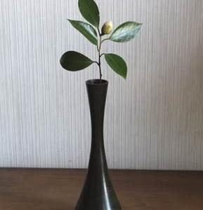 20191205師走①の花
