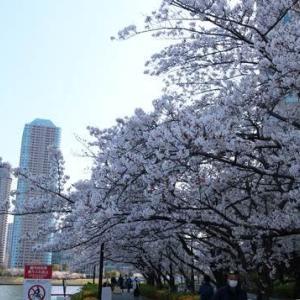 20200402桜散歩続きのつづき
