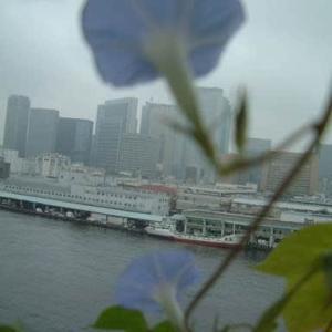 200608・09朝顔と築地魚河岸