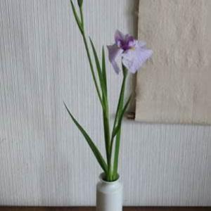 20210513・15皐月稽古①の花