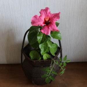 20210521皐月稽古②のすきまの花