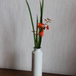 20210607水無月⓪の花
