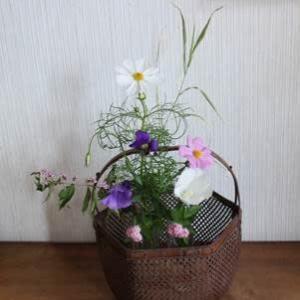 20210916文月①の花