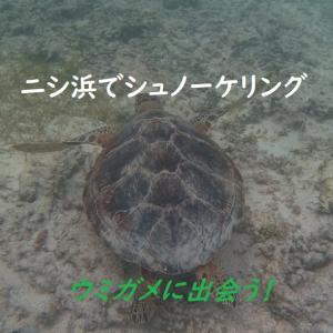 波照間島「ニシ浜ビーチ」でシュノーケリング!ウミガメに出会ったポイントを紹介!