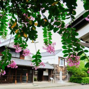 府中市郷土の森博物館 ~夏から秋に咲く花