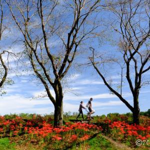 巾着田 ~土手の風景
