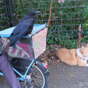 水元公園 ~人を無視するカラスと犬