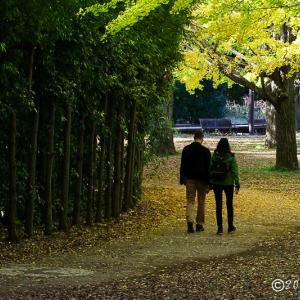 昭和記念公園 ~イチョウ並木にて