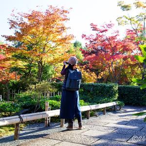 昭和記念公園 ~日本庭園