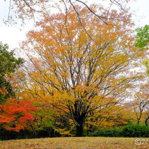 光が丘公園 ~紅葉