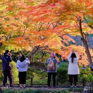 日比谷公園 ~紅葉