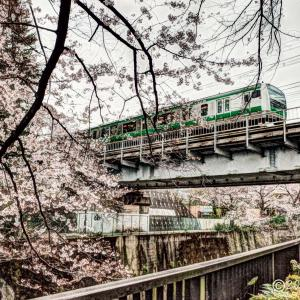 石神井川 ~ぶらり桜