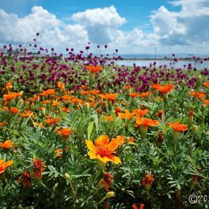 葛西臨海公園 ~♪夏のオレンジ