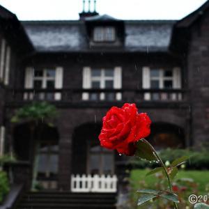 旧古河庭園 ~秋バラⅠ