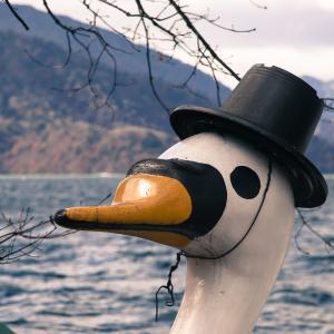 白鳥のシーズンオフ