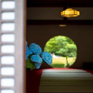 鎌倉の紫陽花名勝地