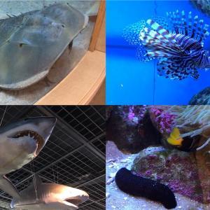 九十九島水族館海きららに行ってきたので写真多めにレポートする