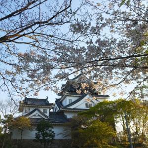 岡崎城の桜〜青春18きっぷ旅岡崎編①〜
