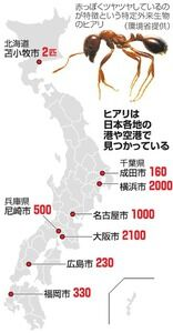 【南米原産の特定外来生物】ヒアリ東京湾で発見女王アリも⁉