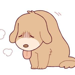 愛犬の気になる症状とは!?下痢が止まらない原因をご紹介