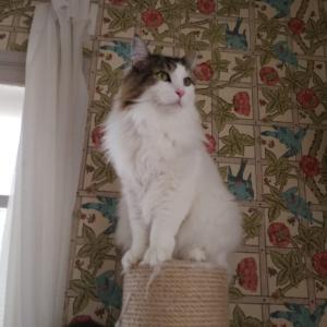 家庭内の問題はほぼ猫が解決してくれる