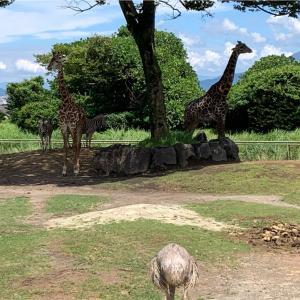 4年ぶりの動物園、とても嬉しかったこと