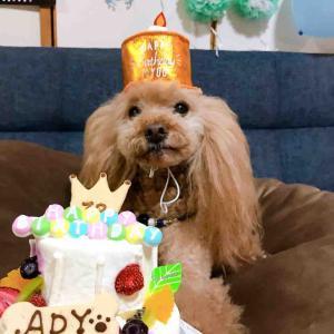 アディ13歳のお誕生日
