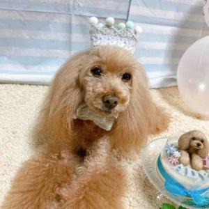 アディ兄ちゃんのお誕生日🎂