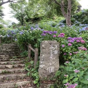 【伊豆下田】下田公園あじさい祭