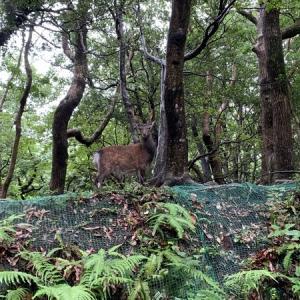 【屋久島】周遊ツアー② 西部林道は動物に会えるよ