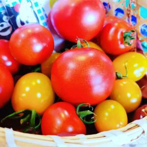 松尾さんのトマトでまかないカレー