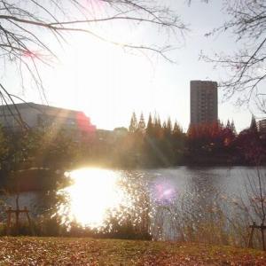 杁ヶ池公園の黄葉&紅葉