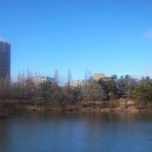 杁ヶ池公園健康散歩と野鳥たち